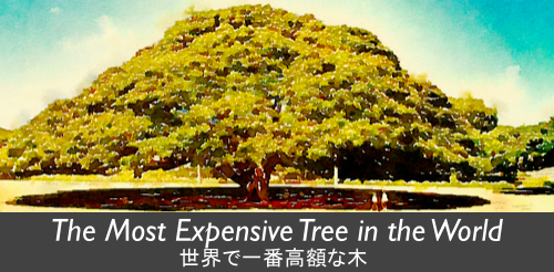 Hitachi Tree Banner
