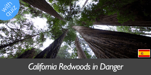 redwoods in danger banner