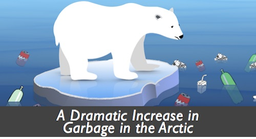 polar bear garbage