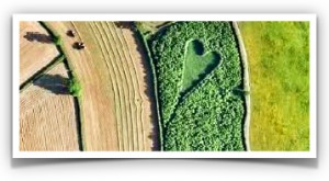 heart-shaped meadow3